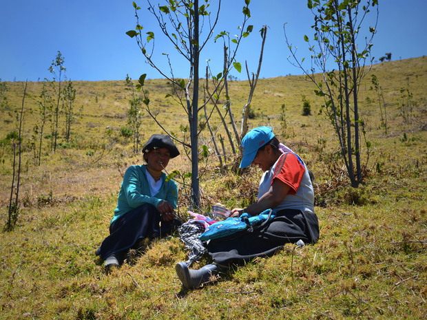 Projects 20 20reforesting 20northern 20ecuador 20 202013 20 201