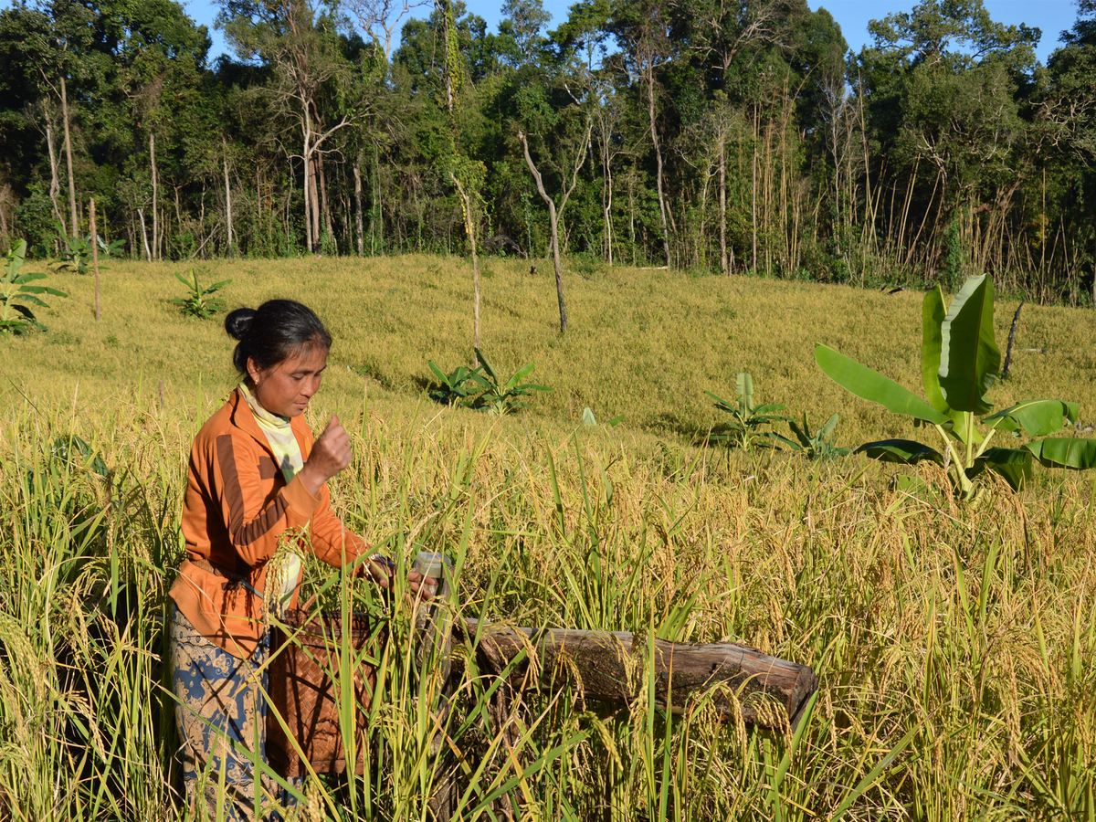 Projects   alternative sustainable livelihoods in mondulkiri   2016   1