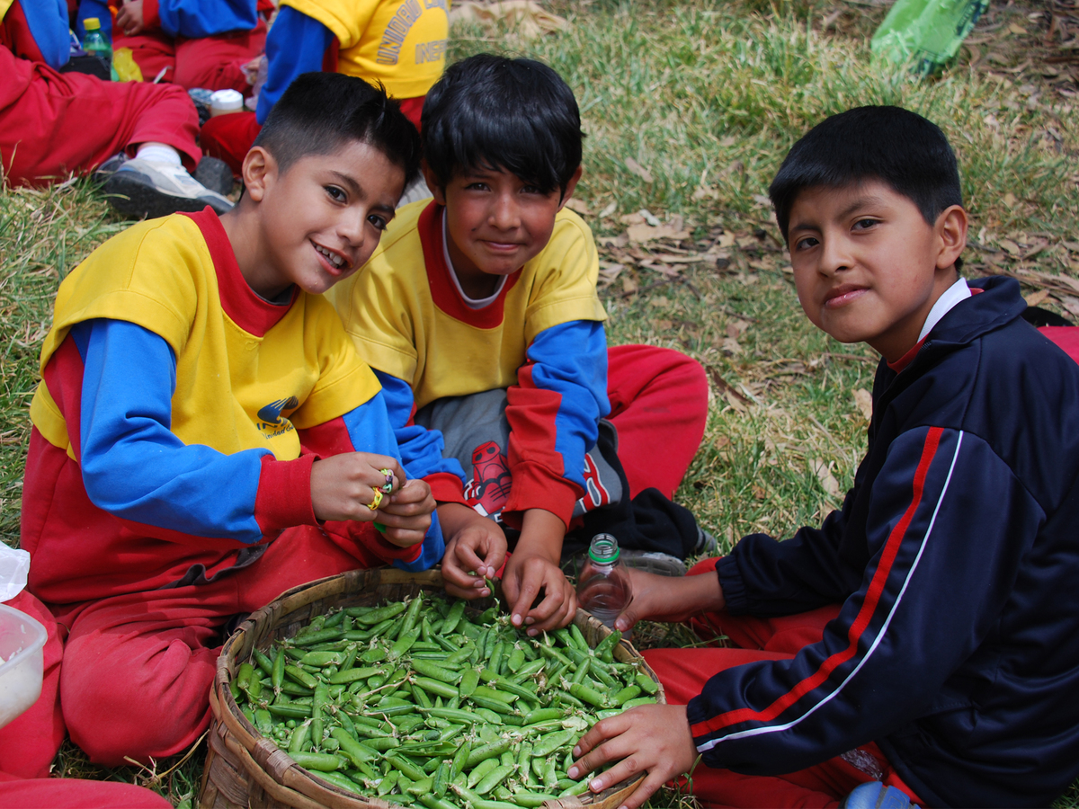 Projects   holistic education in quito   2014   1